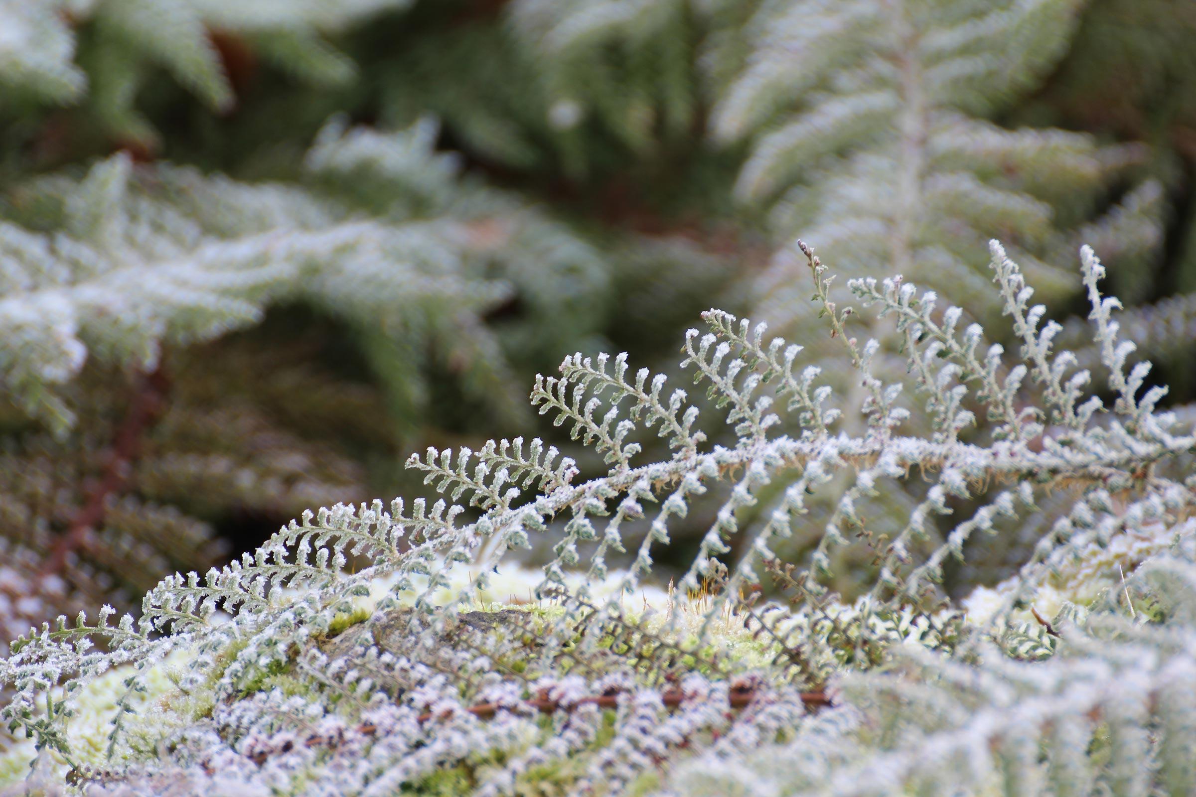 Winterpflanzen