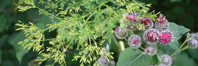 Pflanzen bewundern